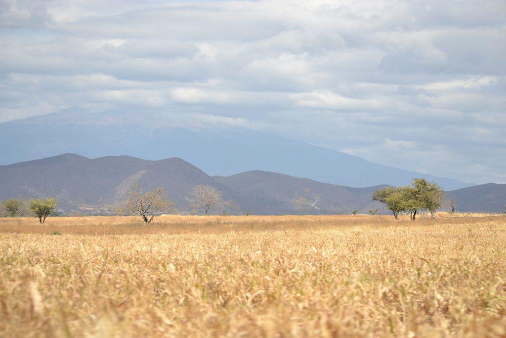 Pejzaż doliny Tehuacán  fot. Noyolcont, opublikowano na licencji CC BY-SA 3.0, via Wikimedia Commons